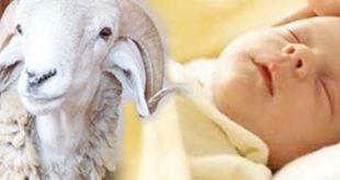 بالصور دعاء العقيقة , تعرف علي دعاء العقيقه للمولود 4257 3 310x165