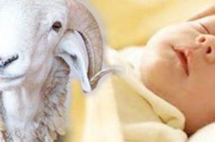 بالصور دعاء العقيقة , تعرف علي دعاء العقيقه للمولود 4257 3 310x205