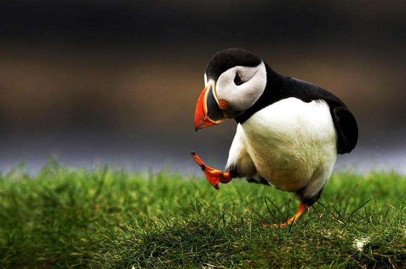 صور صور طيور , بدقة عالية شاهد صور طيور مختلفة ومتنوعة