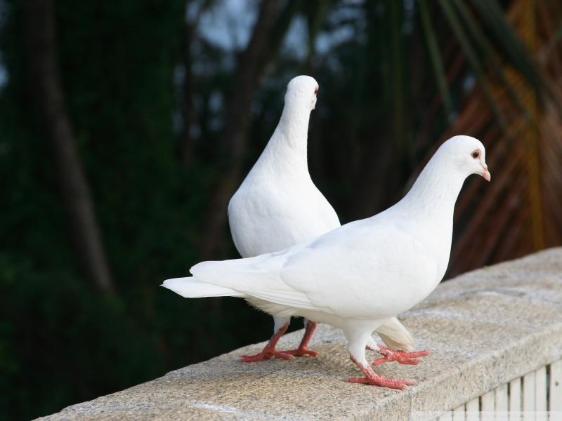 بالصور صور طيور , بدقة عالية شاهد صور طيور مختلفة ومتنوعة 4275 10