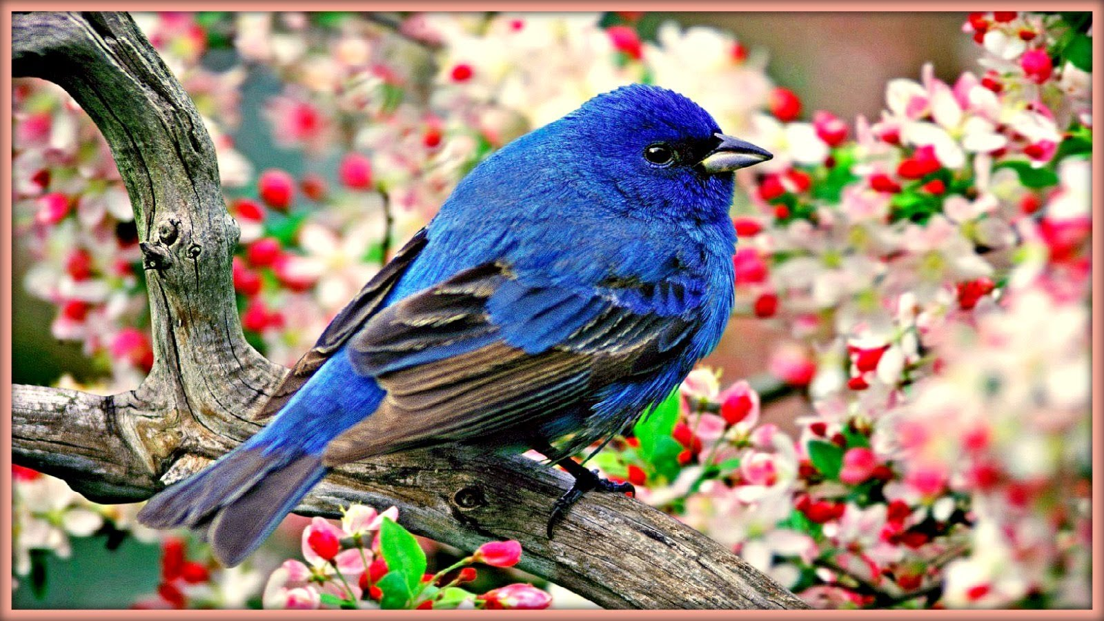 بالصور صور طيور , بدقة عالية شاهد صور طيور مختلفة ومتنوعة 4275 11