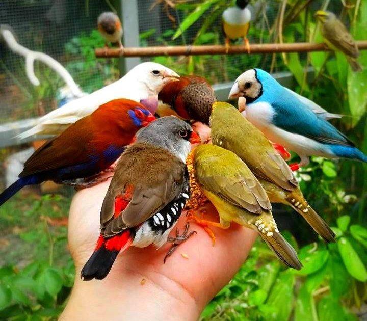 بالصور صور طيور , بدقة عالية شاهد صور طيور مختلفة ومتنوعة 4275 12