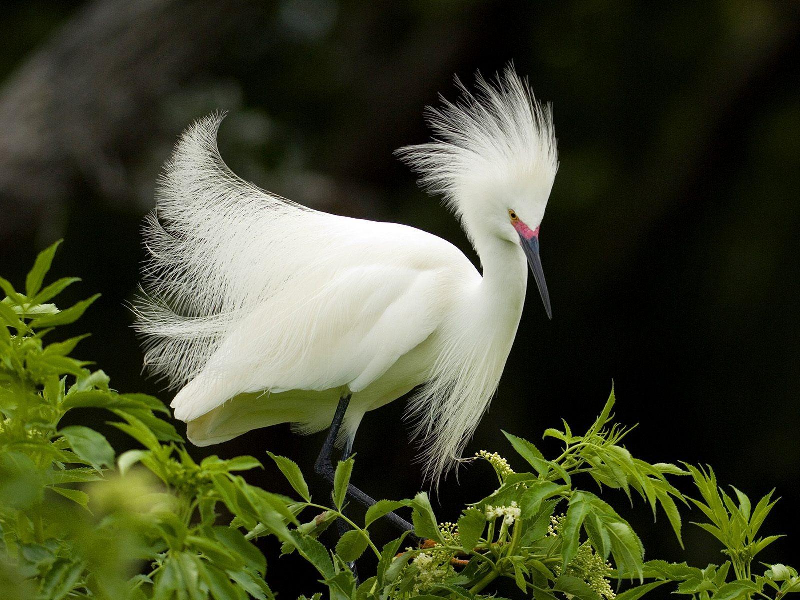 بالصور صور طيور , بدقة عالية شاهد صور طيور مختلفة ومتنوعة 4275 2