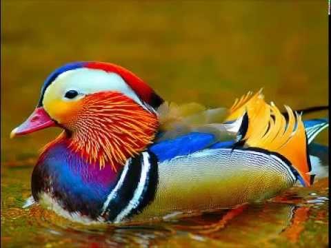 بالصور صور طيور , بدقة عالية شاهد صور طيور مختلفة ومتنوعة 4275 3