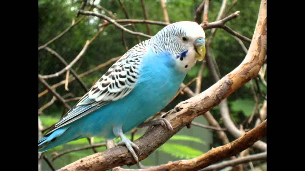 بالصور صور طيور , بدقة عالية شاهد صور طيور مختلفة ومتنوعة 4275 4