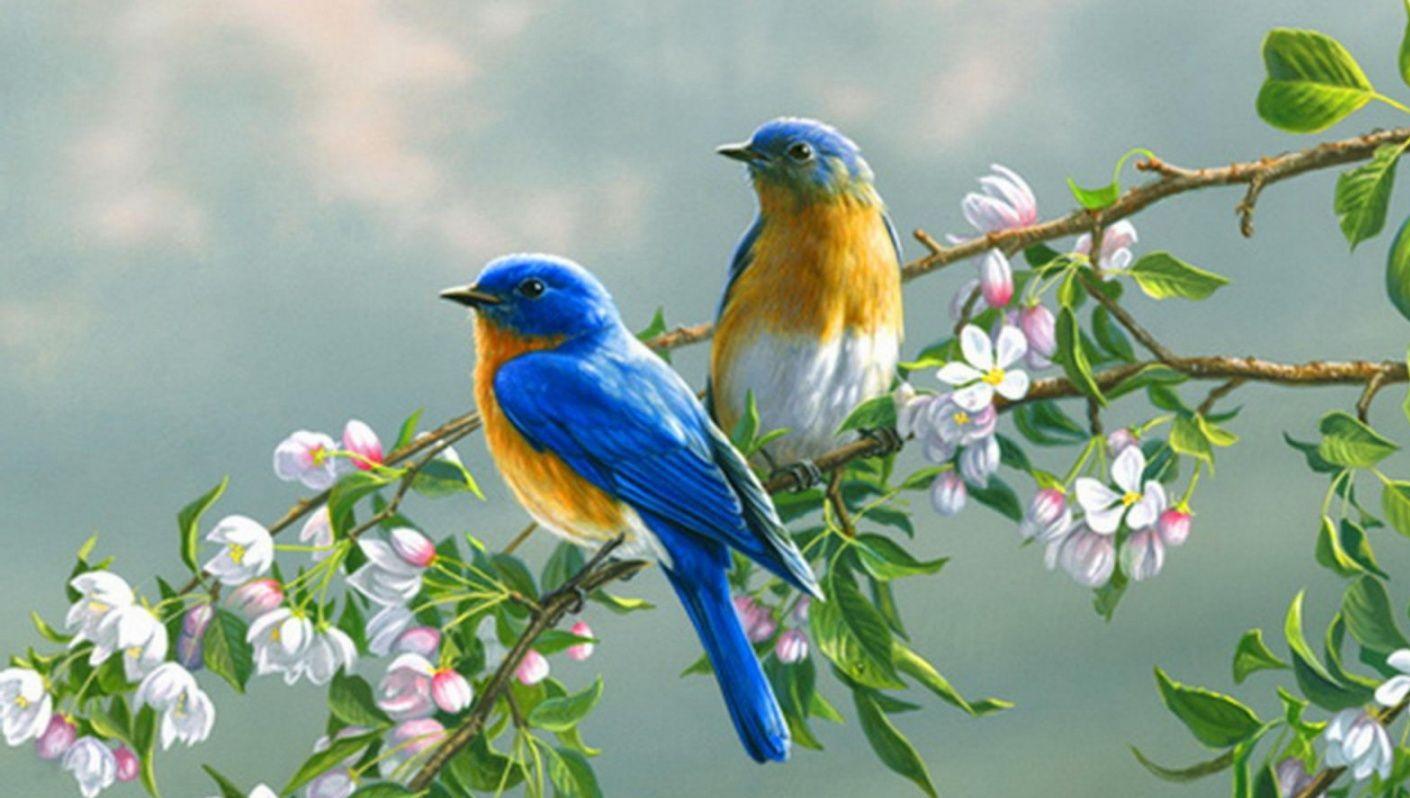بالصور صور طيور , بدقة عالية شاهد صور طيور مختلفة ومتنوعة 4275 5