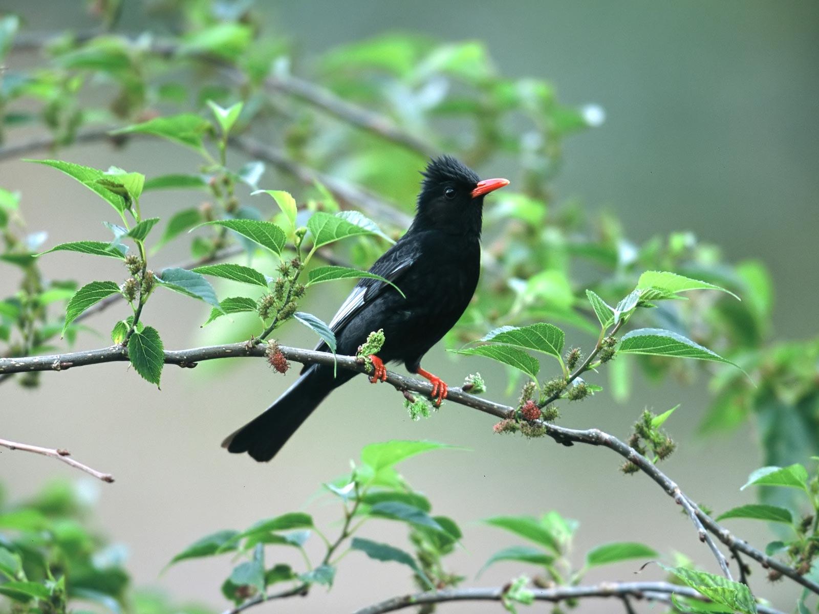 بالصور صور طيور , بدقة عالية شاهد صور طيور مختلفة ومتنوعة 4275 6