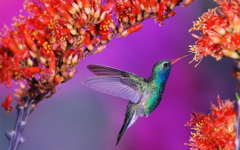 بالصور صور طيور , بدقة عالية شاهد صور طيور مختلفة ومتنوعة 4275 7