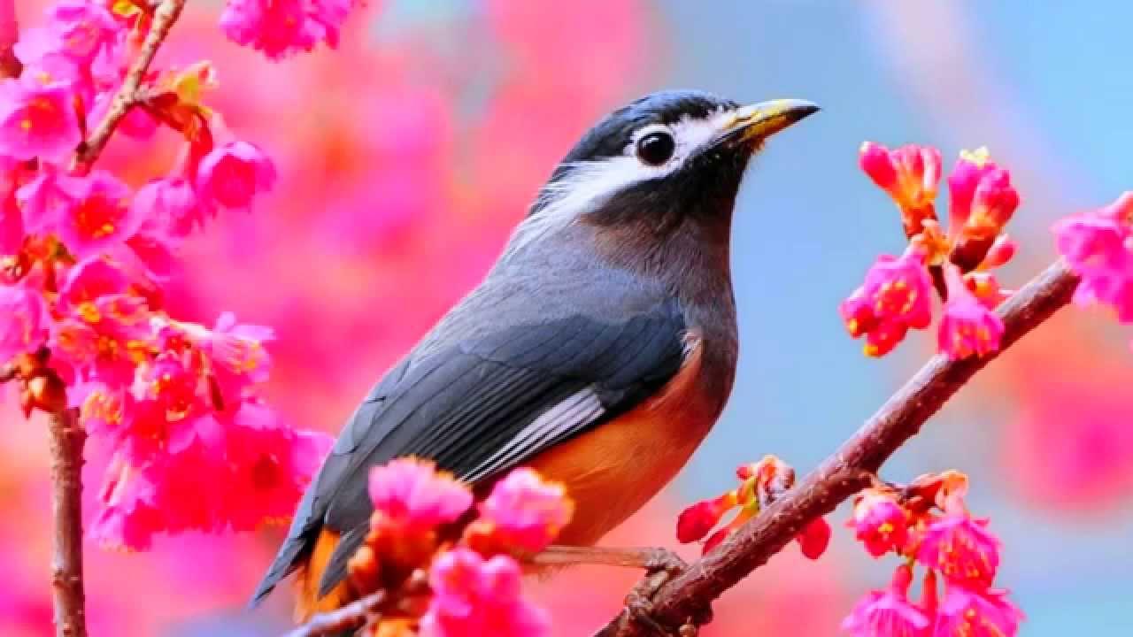 بالصور صور طيور , بدقة عالية شاهد صور طيور مختلفة ومتنوعة 4275 8