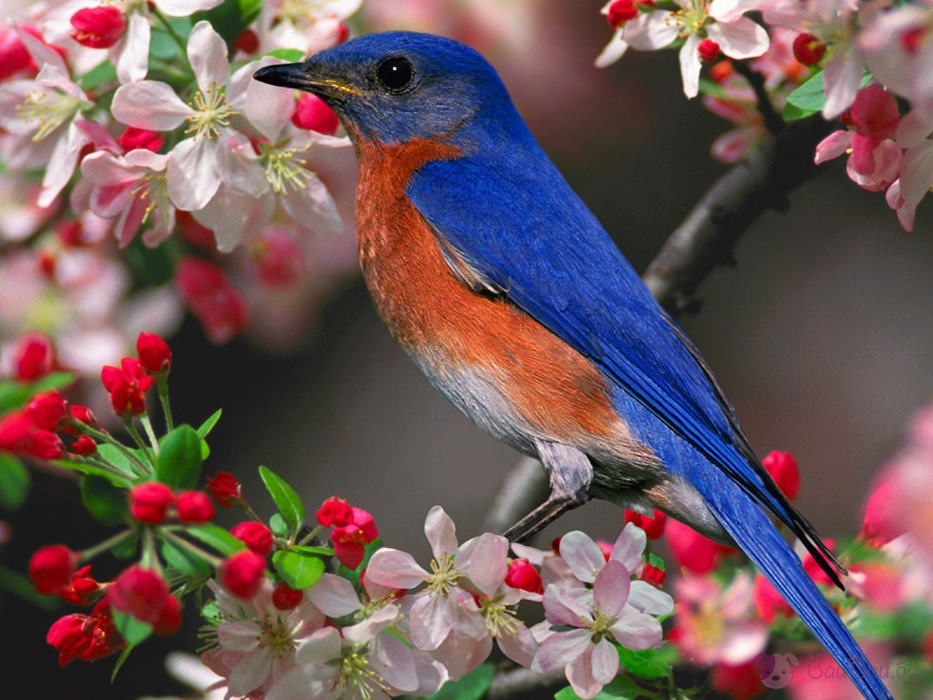 بالصور صور طيور , بدقة عالية شاهد صور طيور مختلفة ومتنوعة 4275 9