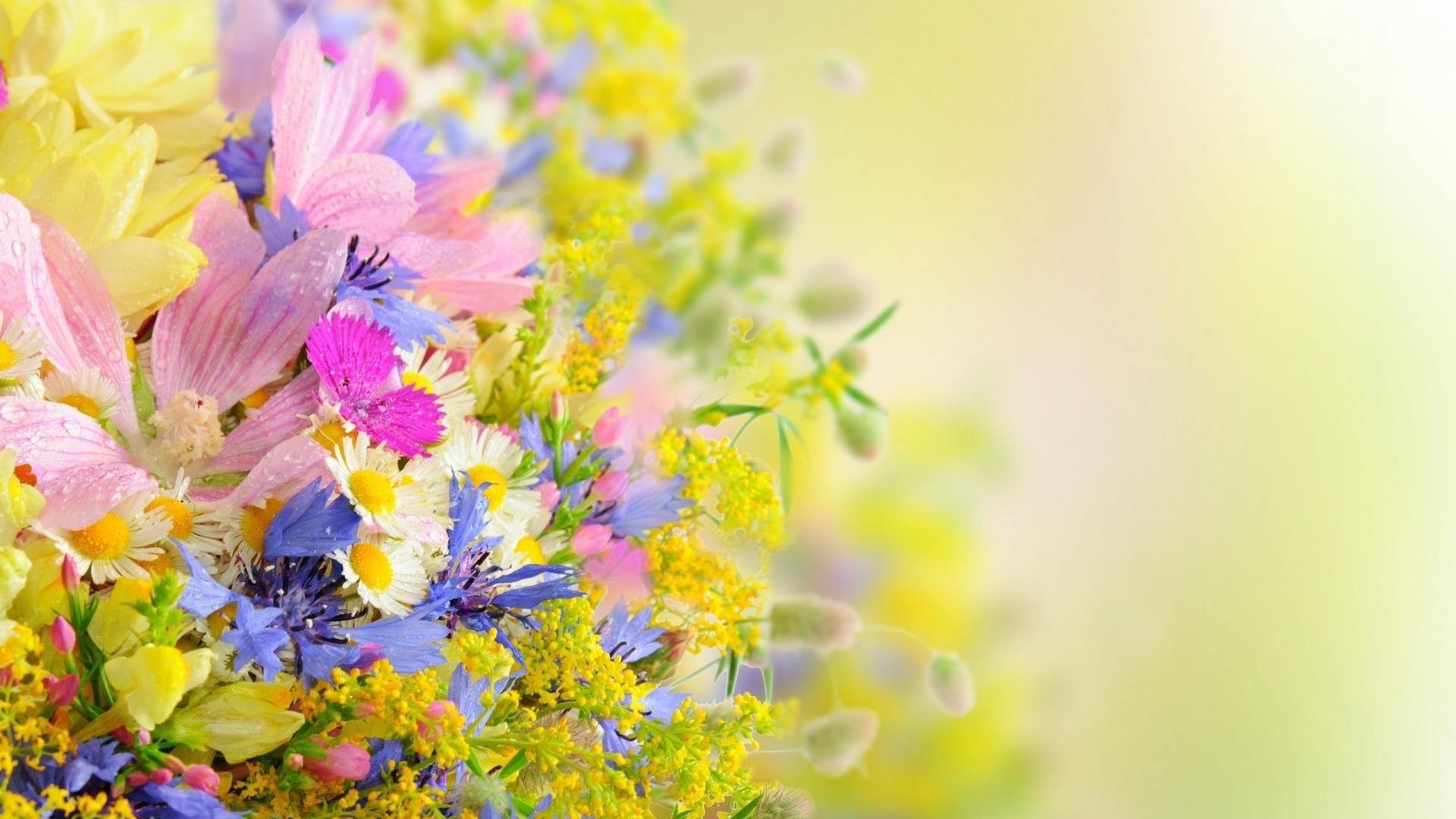 بالصور صور خلفيات ورد , اجمل الخلفيات الوردية الرائعه 4303 1