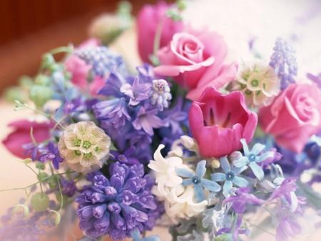 بالصور صور خلفيات ورد , اجمل الخلفيات الوردية الرائعه 4303 3