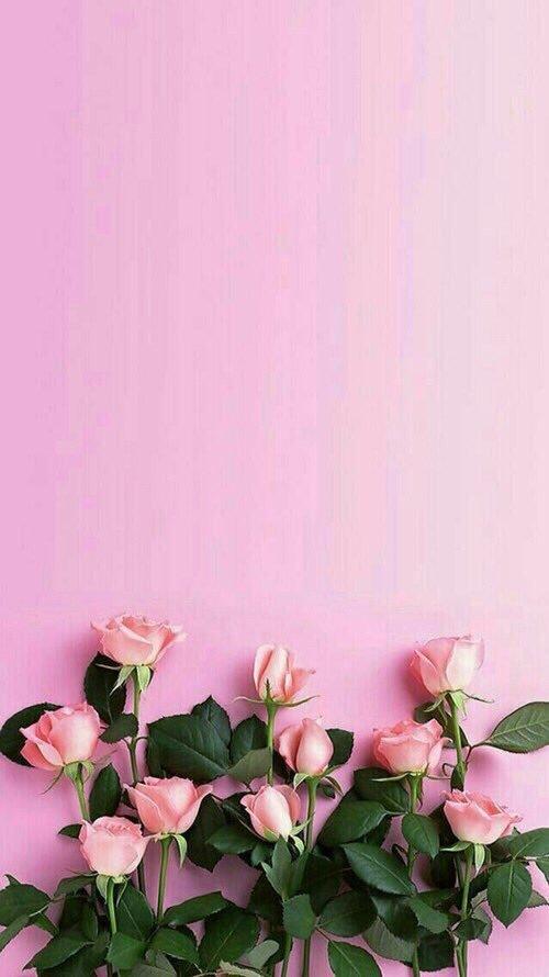بالصور صور خلفيات ورد , اجمل الخلفيات الوردية الرائعه 4303 8