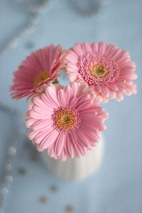 بالصور صور خلفيات ورد , اجمل الخلفيات الوردية الرائعه 4303 9