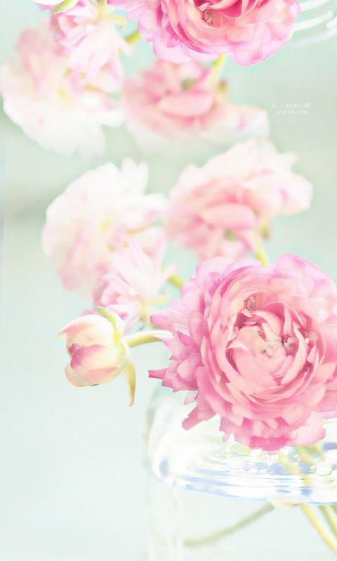 بالصور صور خلفيات ورد , اجمل الخلفيات الوردية الرائعه 4303