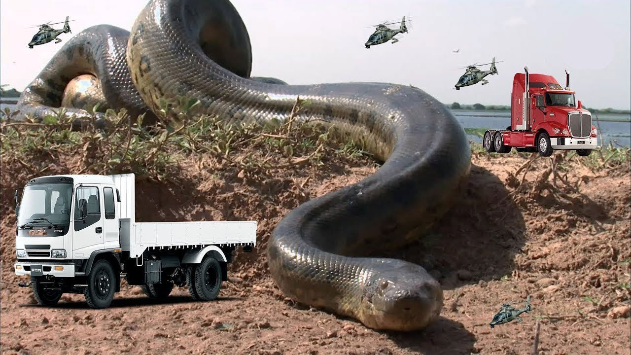 بالصور اكبر ثعبان في العالم , صور ثعبان الاناكوندا 4383 1