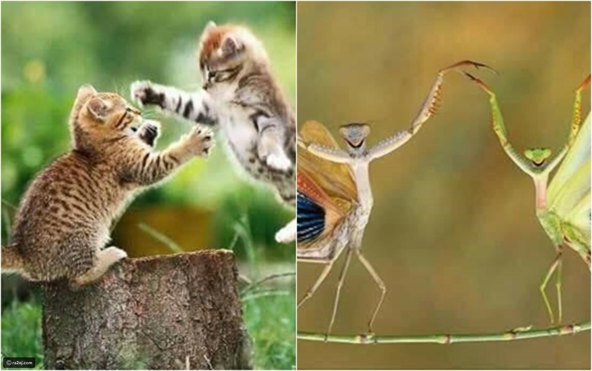 بالصور صور حيوانات مضحكة , صور كوميكسات حيوانات كوميدي 4447 10