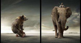 صور صور حيوانات مضحكة , صور كوميكسات حيوانات كوميدي