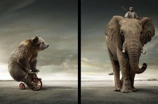 صورة صور حيوانات مضحكة , صور كوميكسات حيوانات كوميدي