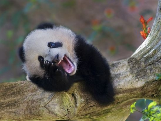 بالصور صور حيوانات مضحكة , صور كوميكسات حيوانات كوميدي 4447 2
