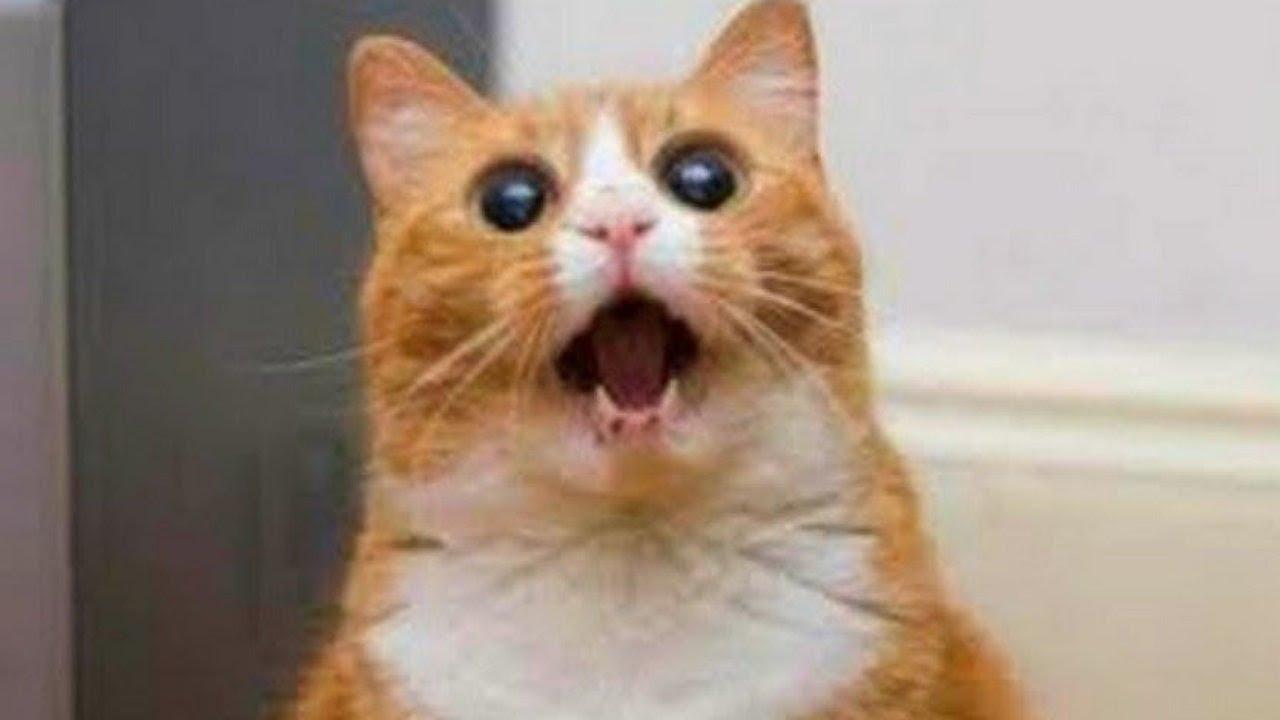 بالصور صور حيوانات مضحكة , صور كوميكسات حيوانات كوميدي 4447 3