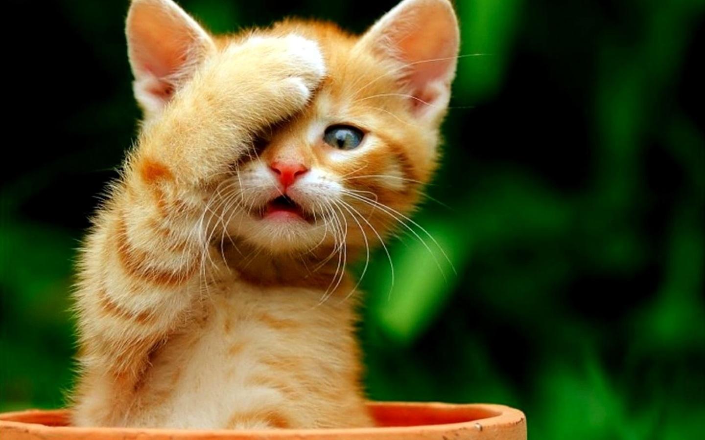 بالصور صور حيوانات مضحكة , صور كوميكسات حيوانات كوميدي 4447 4