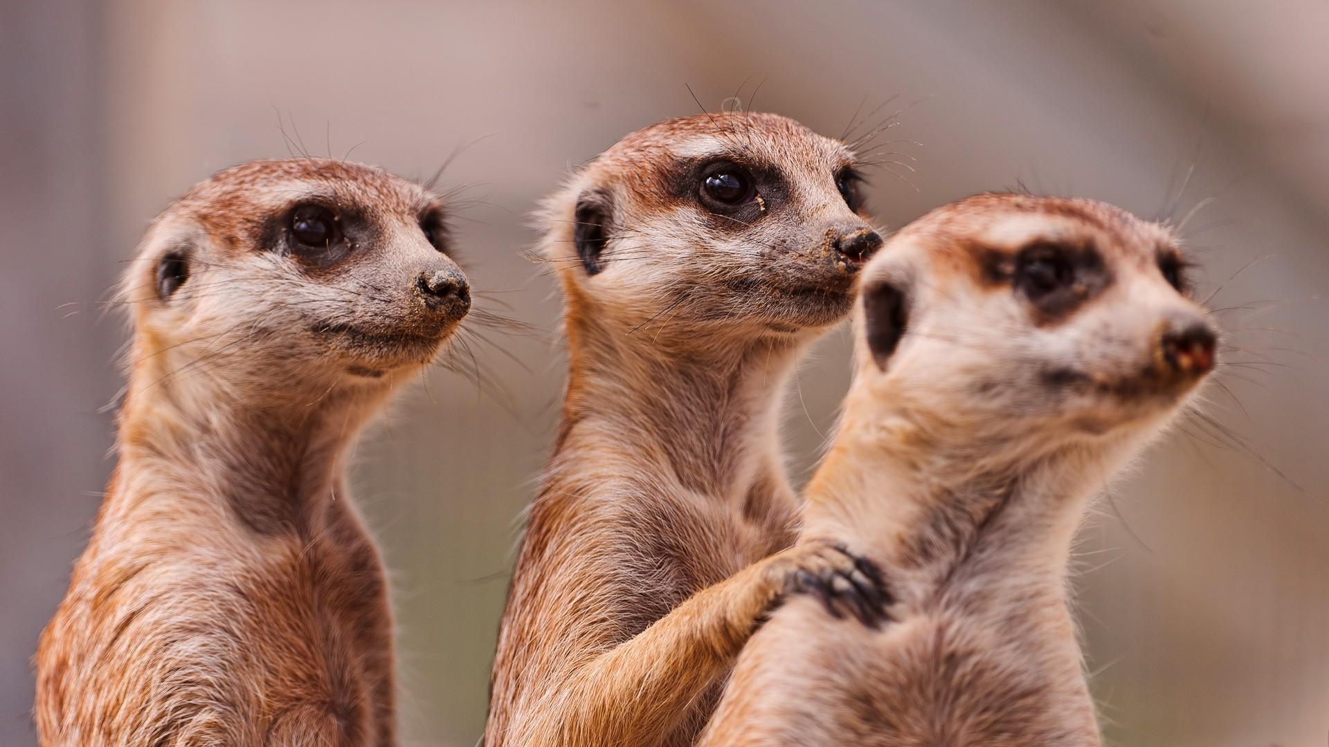 بالصور صور حيوانات مضحكة , صور كوميكسات حيوانات كوميدي 4447 5