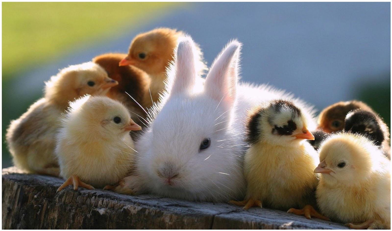 بالصور صور حيوانات مضحكة , صور كوميكسات حيوانات كوميدي 4447 7