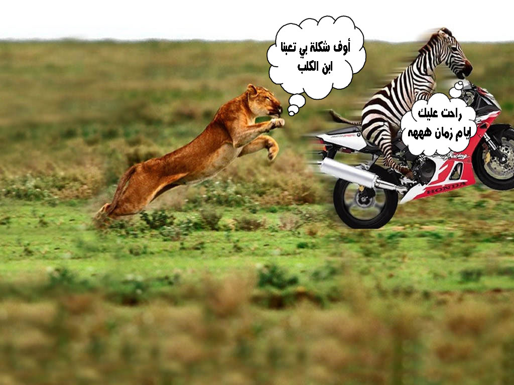 بالصور صور حيوانات مضحكة , صور كوميكسات حيوانات كوميدي 4447 9
