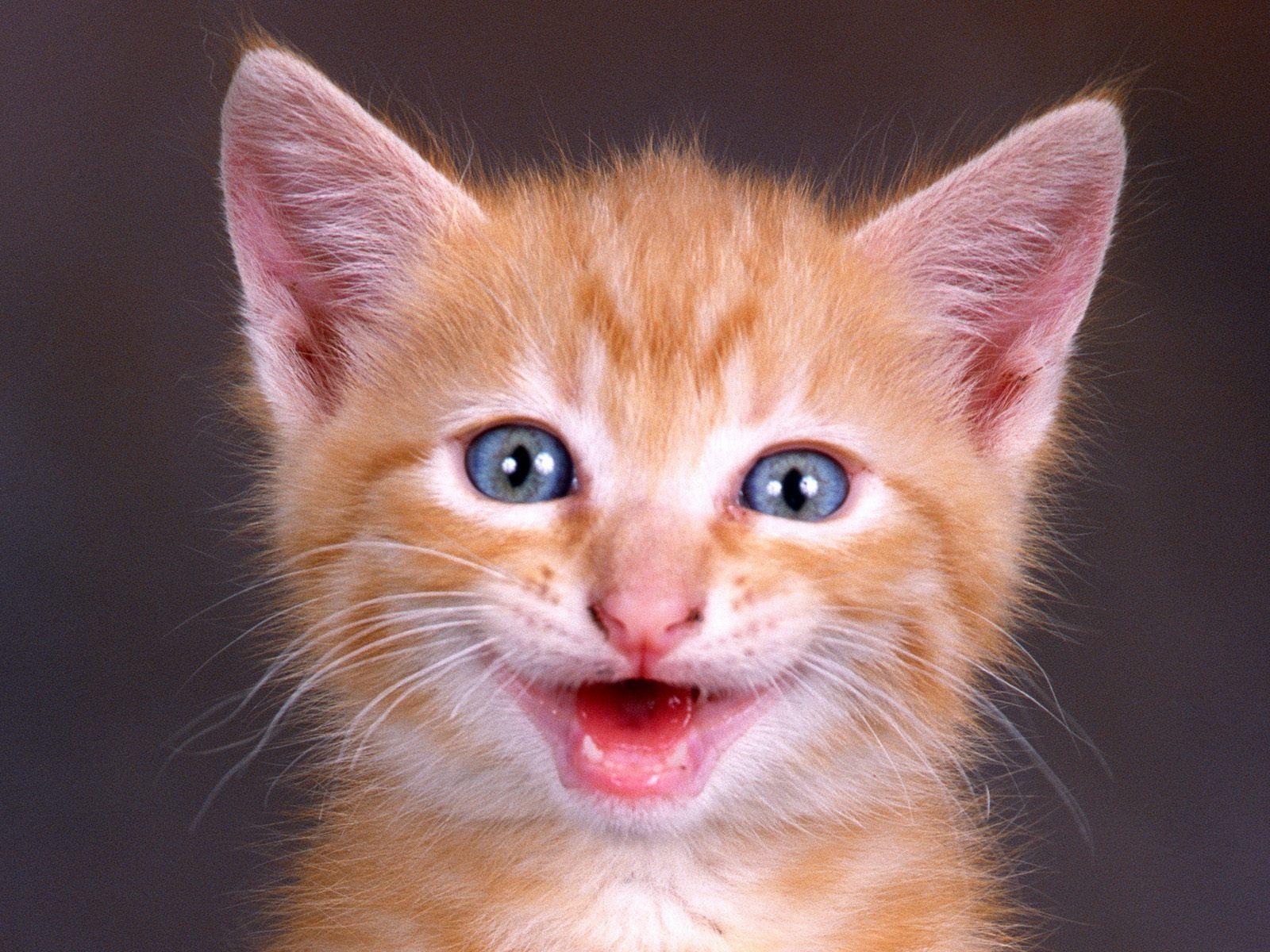 بالصور الصور المضحكة الجديدة , صور حيوانات كوميدية جدا 4484 6