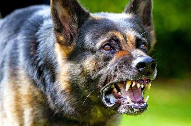 صورة اخطر انواع الكلاب , بالصور اخطر اشرس انواع الكلاب في العالم