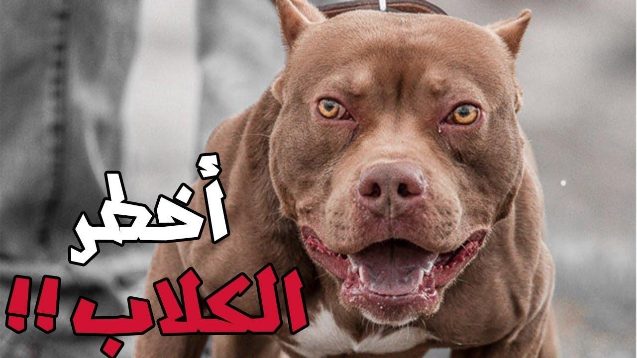 بالصور اخطر انواع الكلاب , بالصور اخطر اشرس انواع الكلاب في العالم 6005 4