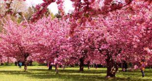 بالصور اجمل الصور اشجار , اشجار جميلة وجذابة 11299 13 310x165
