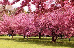 صور اجمل الصور اشجار , اشجار جميلة وجذابة