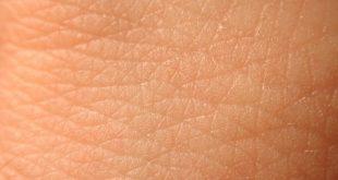 بالصور بحث عن الجلد 11751 2 310x165