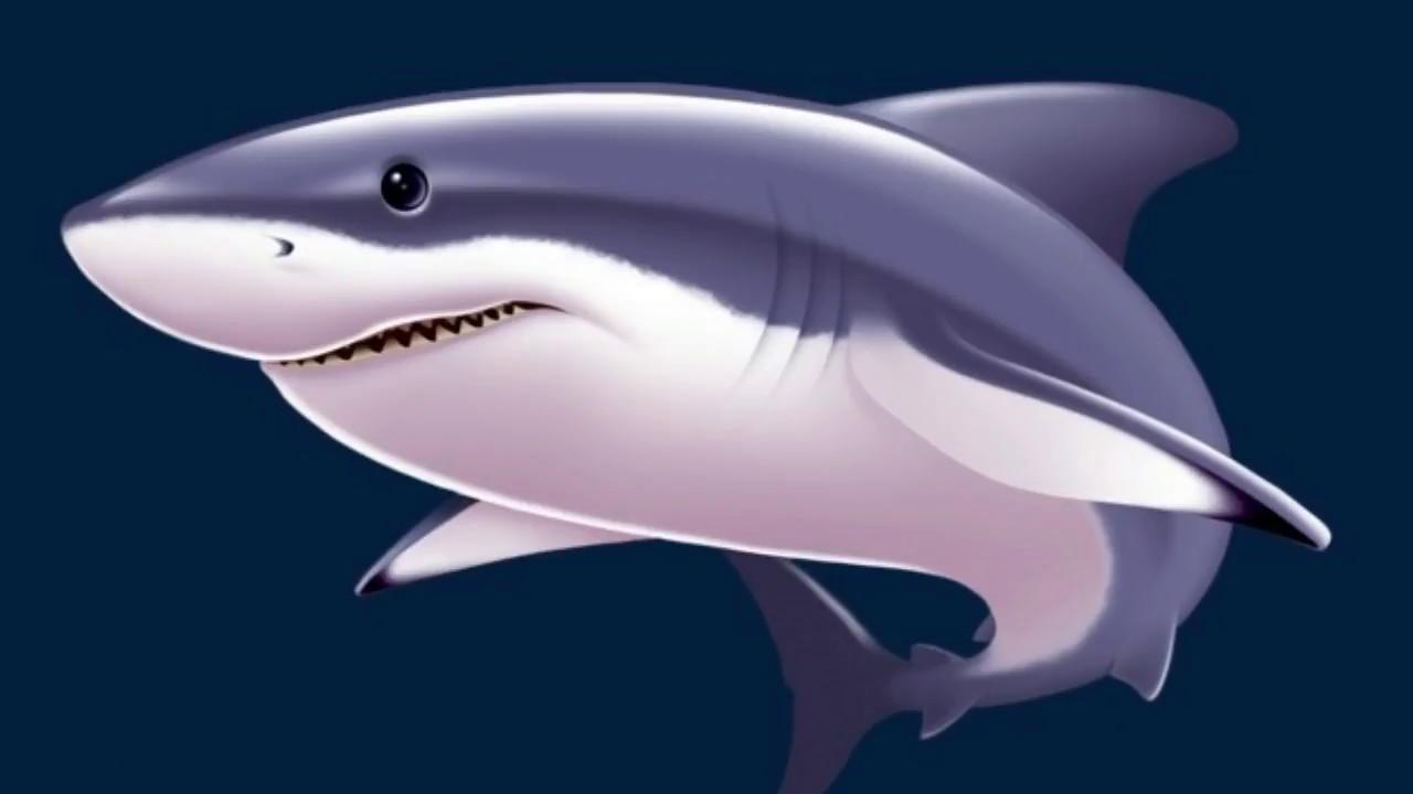 بالصور رؤية الحوت في البحر في المنام 11772 1