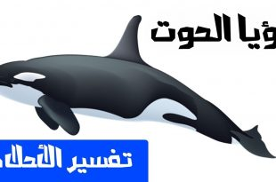 صورة رؤية الحوت في البحر في المنام , تفسير الحوت في المنام