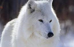 صور اجمل الصور حيوانات , حيوانات حول العالم