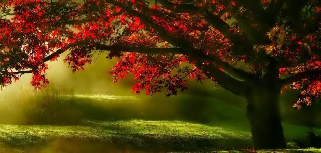 صورة كلام عن الطبيعه , كلمات معبرة عن جمال الطبيعة
