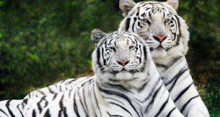 صور صور جميله للحيوانات , اجمل صور خلفيات للحيوانات