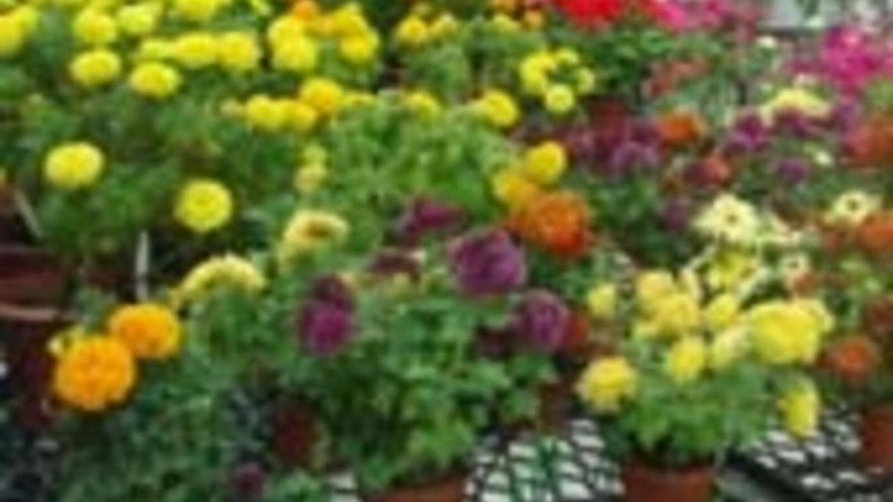 صور بالصور نباتات الزينة , اجمل نباتات الزينه
