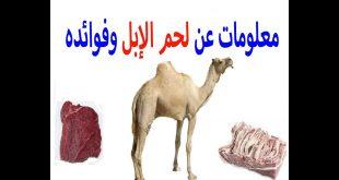 صورة فوائد لحم الجمل , تعرف على فؤائد لحم الجمل