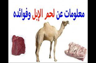 صور فوائد لحم الجمل , تعرف على فؤائد لحم الجمل