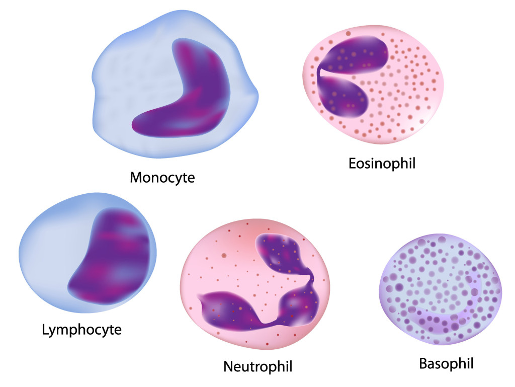 صور ما هو تحليل neutrophils , ماذا تعرف عن تحليل neutrophils