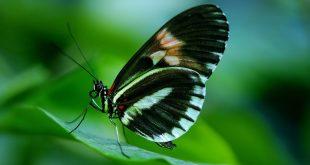 صورة رؤية الفراشة في البيت , تفسير وجود فراشة في البيت