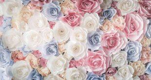 صور خلفيات ورد , يا لها من وردة رائعة