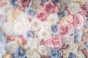 صورة خلفيات ورد , يا لها من وردة رائعة