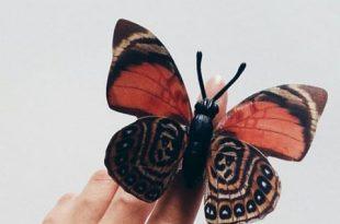 صور صور فراشات روعة , الفراشات والوانها المختلفه الجذابه