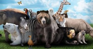 صورة صور حيوانات , اغرب واحلي الحيوانات