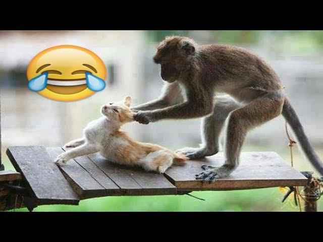 صور مقاطع فيديو مضحكة , اضحك من قلبك